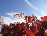 otoño riojano