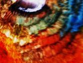 ojo de avestruz