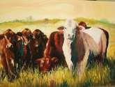 vacas en el chaco