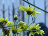 florece en la cordillera