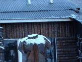desnudo en la nieve