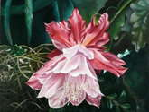 flor de cactus   single bloom cactus
