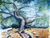 El árbol de Cadaqués