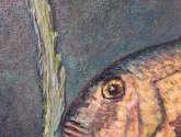 dos peces en el mediterráneo