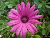simetría en púrpura