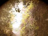Hacia el Claro del Bosque