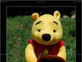 oso de peluche y miel