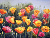 red & yellow poppies