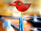 dolca bird