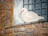 paloma en cornisa