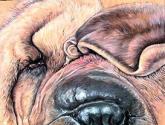 amorfis canis (serie)