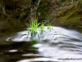 hojas en un río