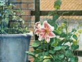 flores en la terraza de mis padres