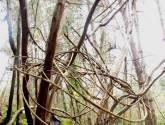 árbol atado sant iscle 2011