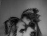 nuestro perro jack