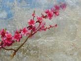 almendros rosas en flor.