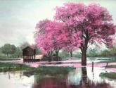 lapacho rosa