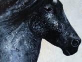 moro (my horse)