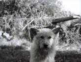can de palleiro