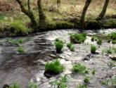 hojas en un río ii