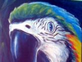 el papagallo silencioso