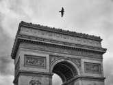 arc de triomphe with bird