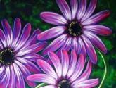 flores majicas