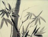 bambú 2