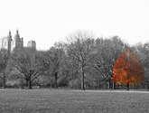 árbol de central park
