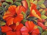 hibiscos rojos