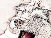 bostezar ; to yawn