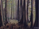 senderos del aconcagua - bosque