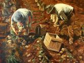 cosechadores