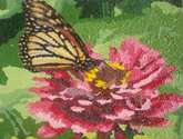 zinias y mariposa