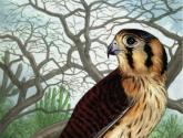 Falco s