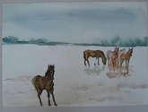 caballos en la costa