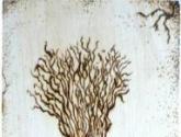 pestañas de cebolla