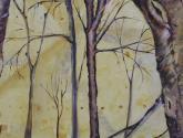 bosque VII