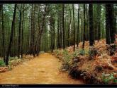 un camino natural