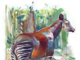 el mítico okapi