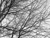 serie árboles - ramas 1